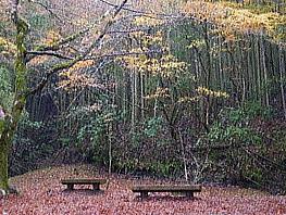 日高邸跡 梅ヶ瀬渓谷