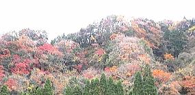 紅葉の見ごろは11月から 11月23日紅葉まつり