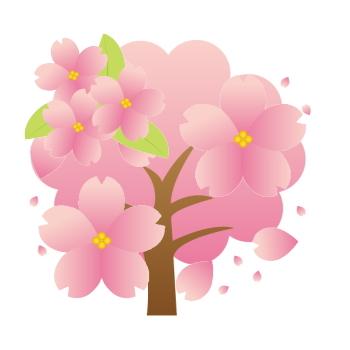 養老渓谷の桜